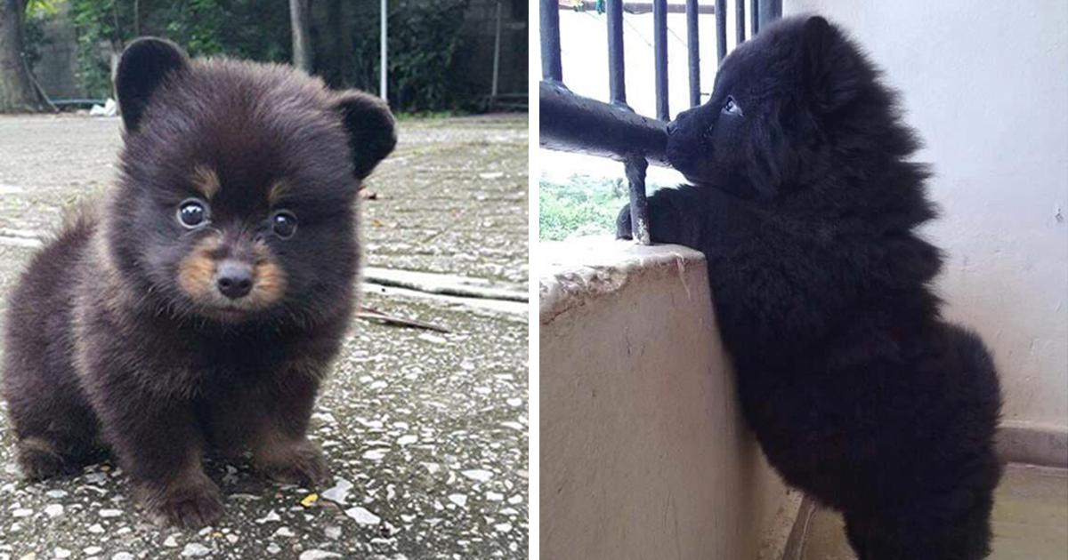 10 + cachorros que son demasiado Adorable para ser Real
