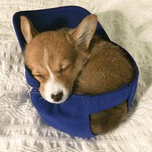 20 Perritos adorables para celebrar el Día del Cachorro