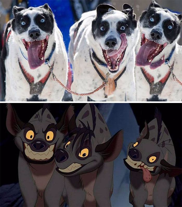 These Hyperactive Dogs Look Like Shenzi, Banzai And Ed From Lion King