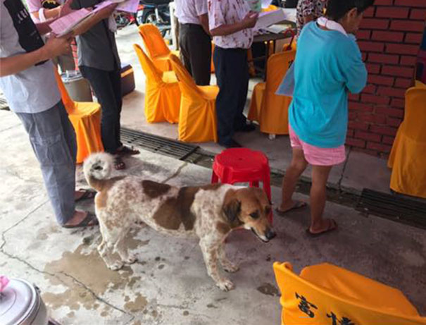 dog-follows-funeral-procession-bobby-malaysia-12