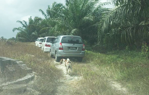 dog-follows-funeral-procession-bobby-malaysia-2