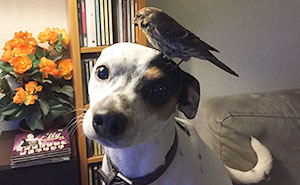 Dog Saves Unconscious Bird, Bird Can't Be More Grateful