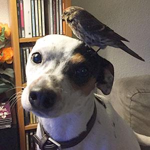 Dog Saves Unconscious Bird, Bird Can't Be More Grateful