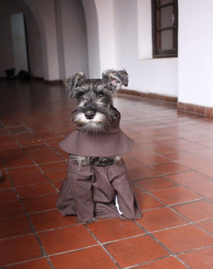 Bolivialainen luostari adoptoi uuden munkin – Friar on nelijalkainen ja karvainen Herran palvelija