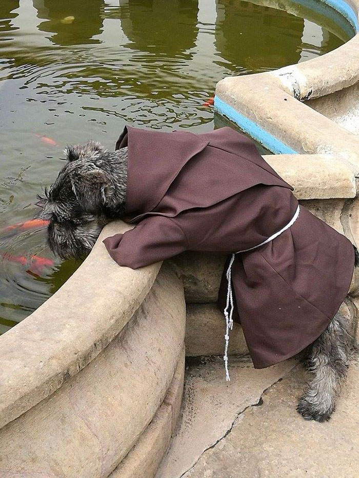 dog-took-silence-schnauzers-013