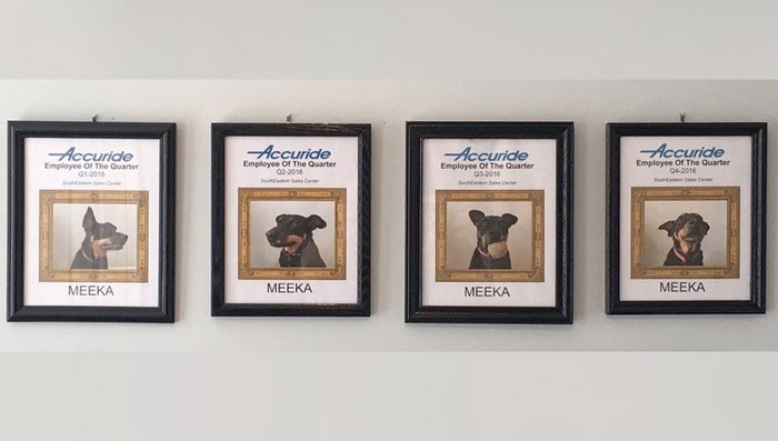dog-wins-best-employee-awards-meeka-10