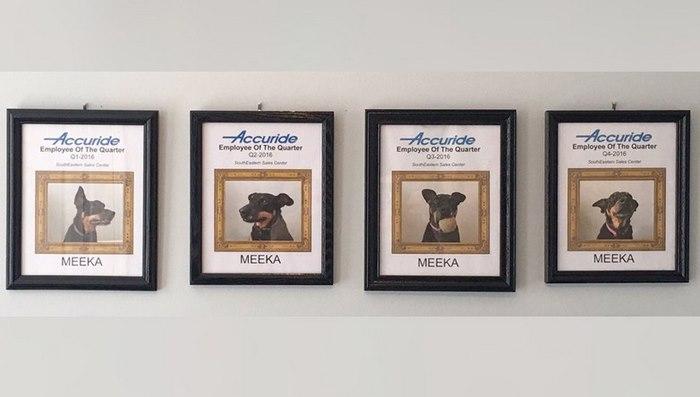 dog-wins-best-employee-awards-meeka-10