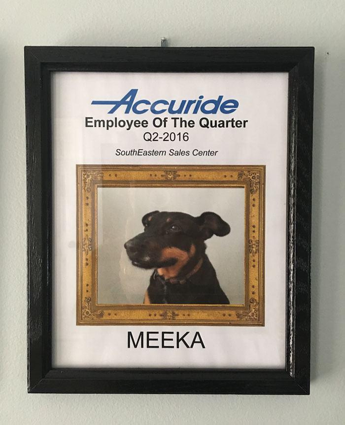 dog-wins-best-employee-awards-meeka-2