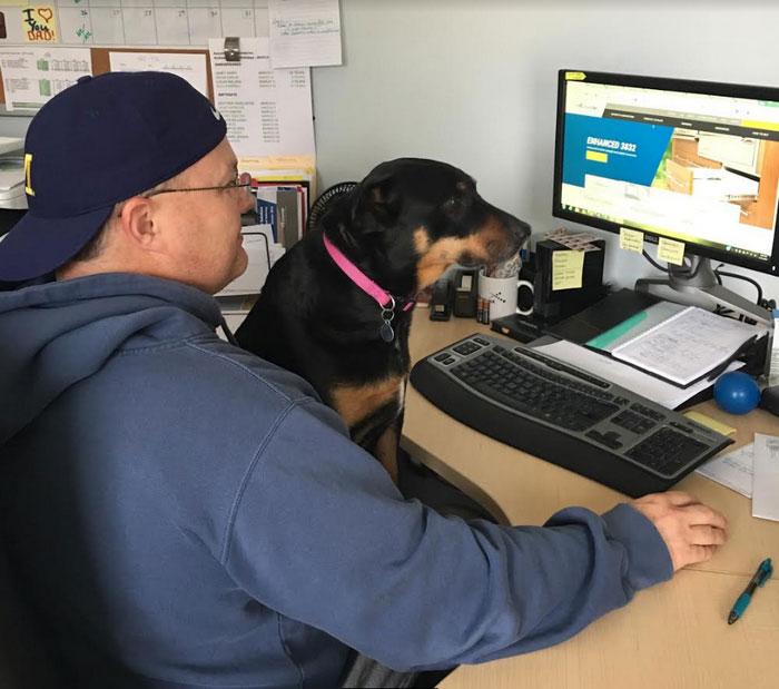 dog-wins-best-employee-awards-meeka-4