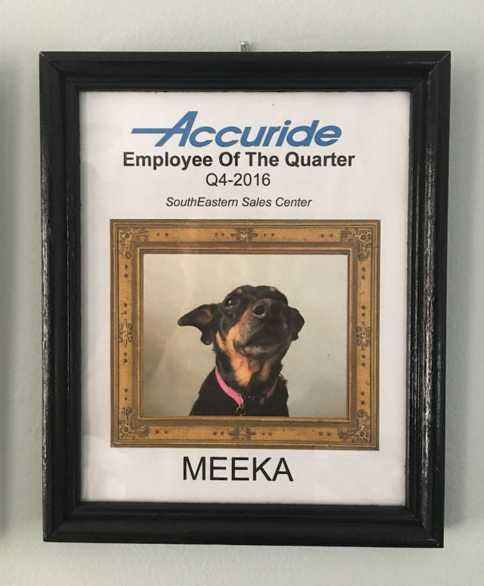 dog-wins-best-employee-awards-meeka-5