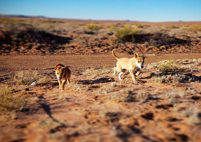 dumped-abandoned-puppies-desert-5