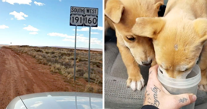 Guys Go On A Road Trip, Find Puppies Dumped In The Middle Of The Desert