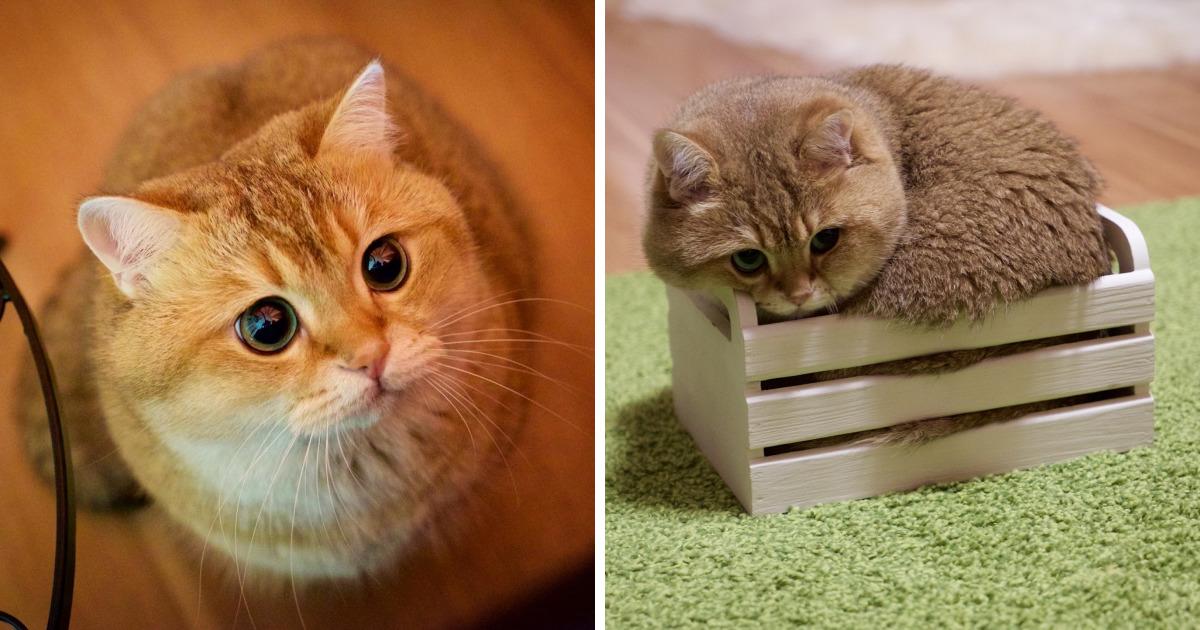 Este es Hosico, el auténtico Gato con Botas en la vida real