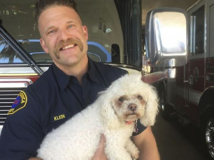 Firefighter Won't Let This Dog Die After Pulling Him From A Burning Home, Performs Mouth-To-Mouth