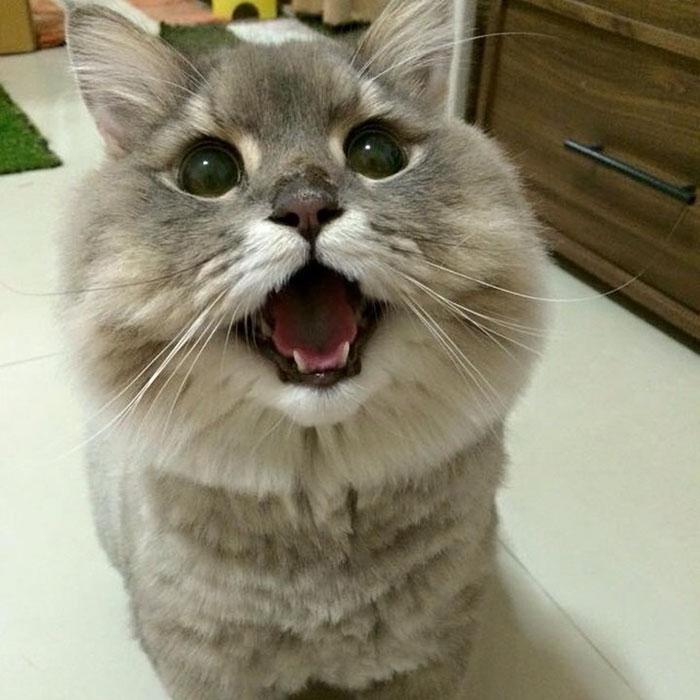 fluffy-cat-bone-bone-thai-12