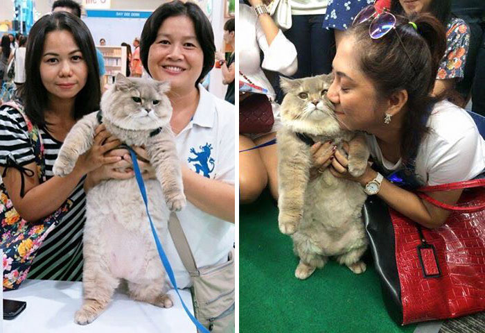 Meet Bone Bone, The Enormous Fluffy Cat From Thailand That Everyone Asks To Take A Picture With