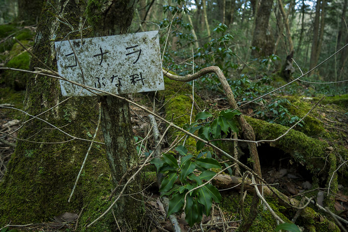 I Went Hiking By Myself To Aokigahara, Japan's Suicide Forest