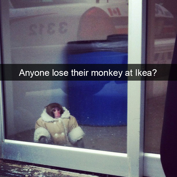 Anyone Lose Their Monkey At Ikea?