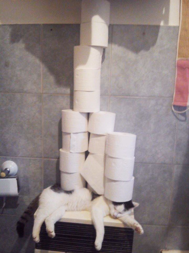Mom Asked Me To Put The Toilet Paper On The Shelf