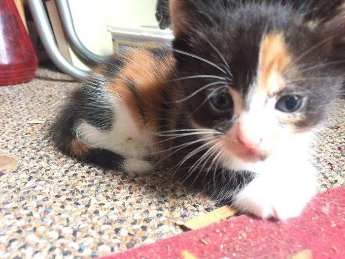 Stray Cats The Stray Cats