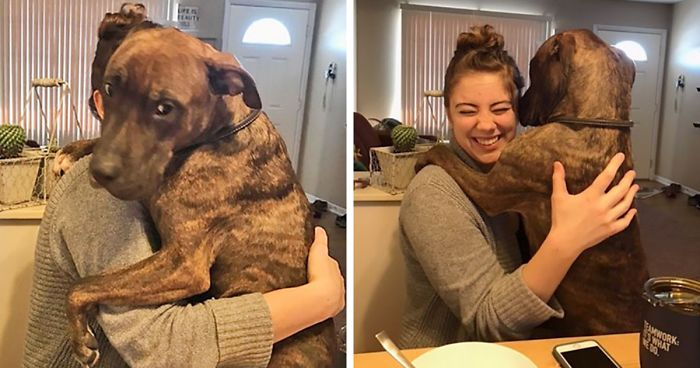 Rescue Dog Hugs New Owner