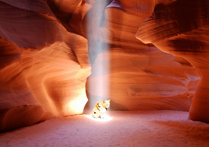 Showering In A Beam Of Light In Antelope Canyon