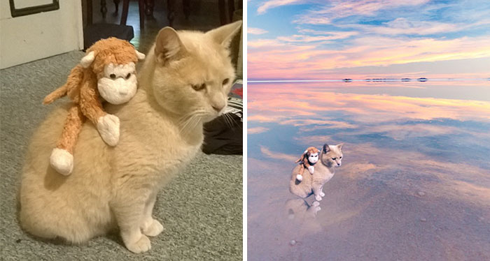 Photoshop Challenge: Help My Cat And His Toy Travel The World