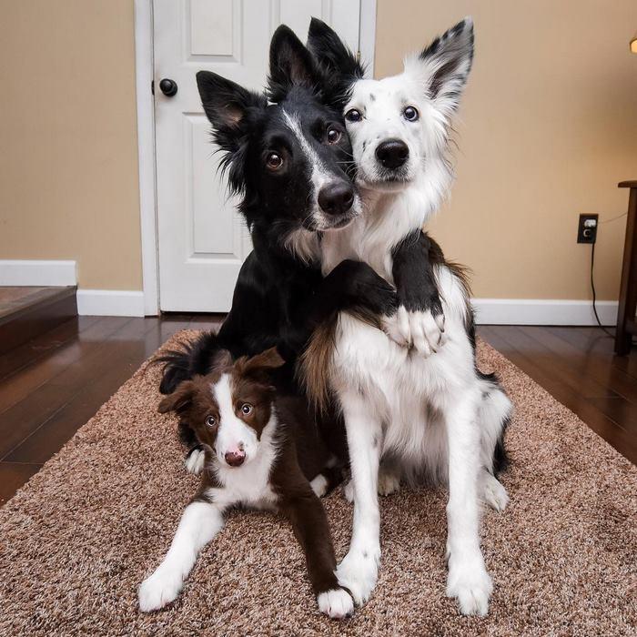 hugging-dogs-new-puppy-trek-envy-zain-13