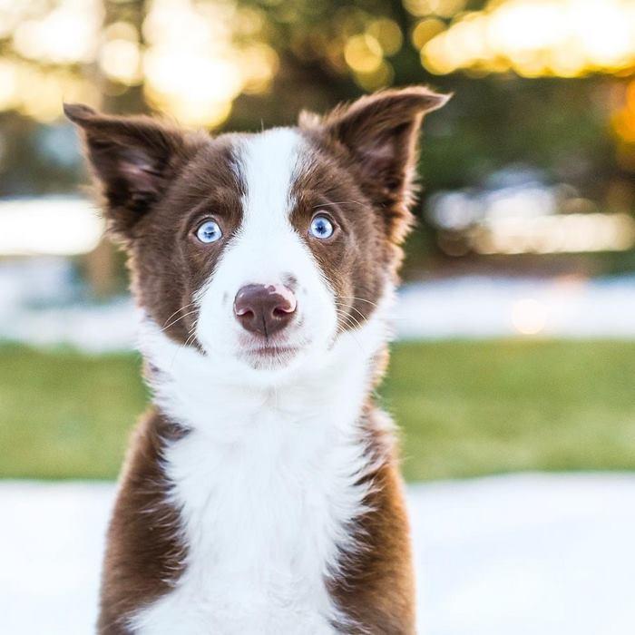 hugging-dogs-new-puppy-trek-envy-zain-16