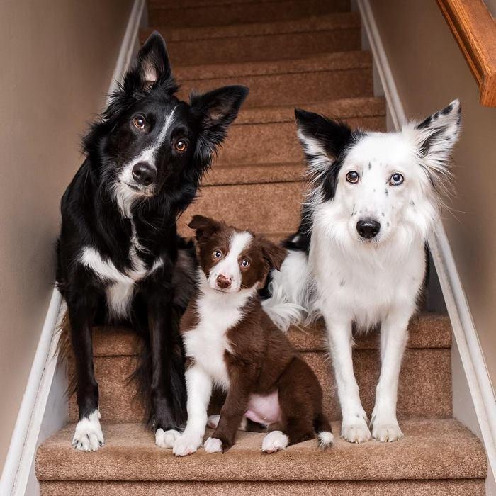 hugging-dogs-new-puppy-trek-envy-zain-18