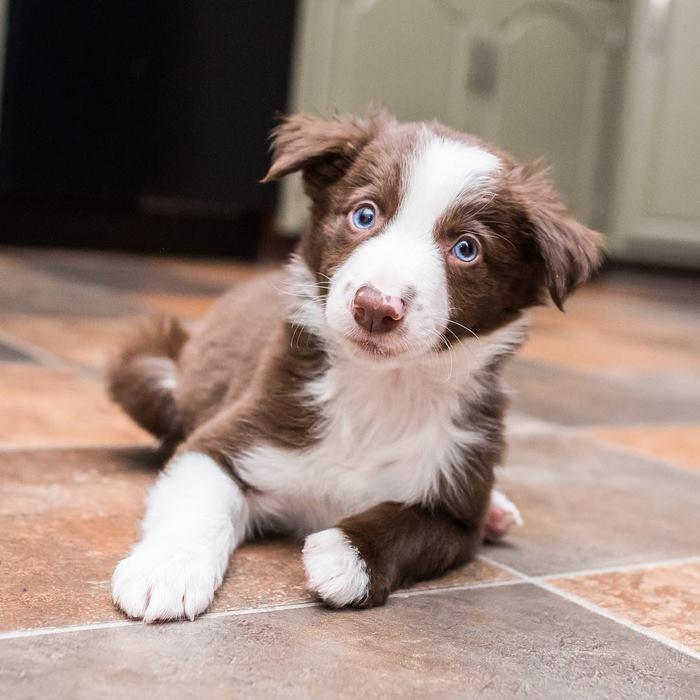 hugging-dogs-new-puppy-trek-envy-zain-25