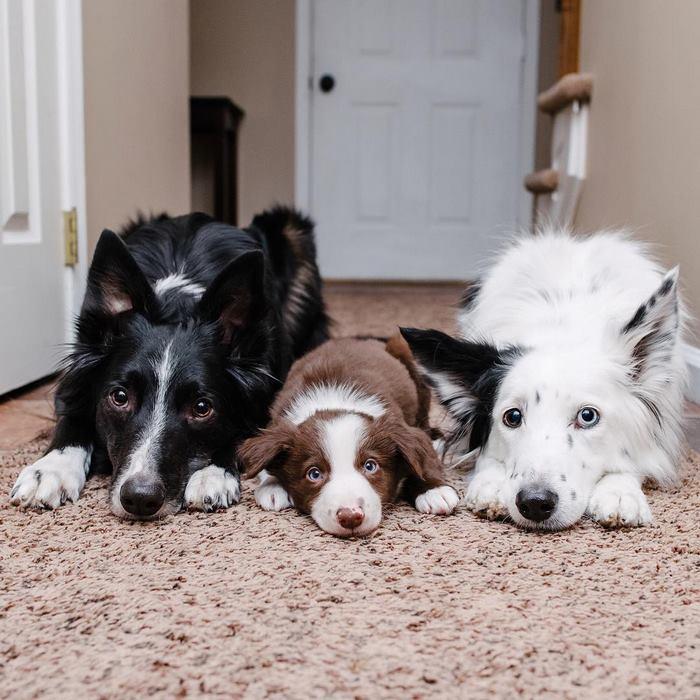 hugging-dogs-new-puppy-trek-envy-zain-29