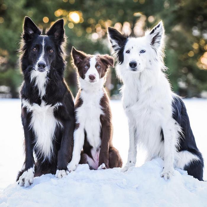 hugging-dogs-new-puppy-trek-envy-zain-3