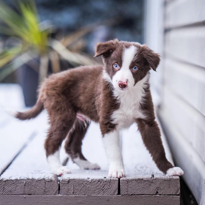 hugging-dogs-new-puppy-trek-envy-zain-6