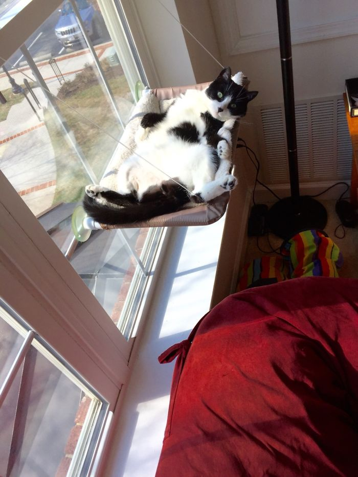 Luna Melted Into Her Kitty Perch.