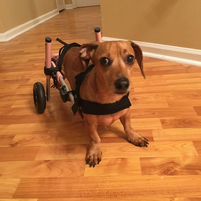 The First Time My Little Girl Used Her Wheel Chair. Rest In Peace Sweet Girl