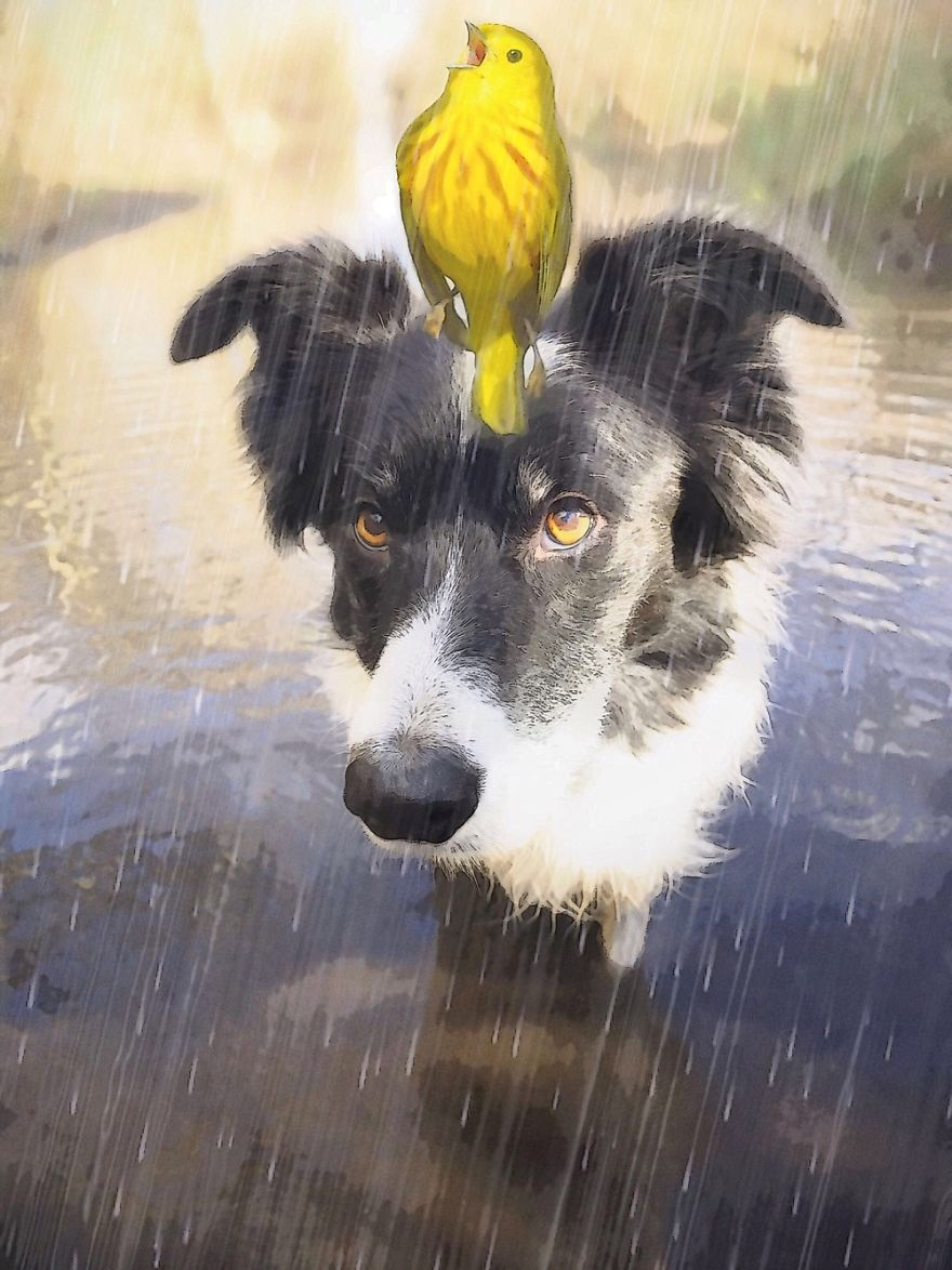 Skye And Big Yellow Bird. Friends In Rainy Weather.