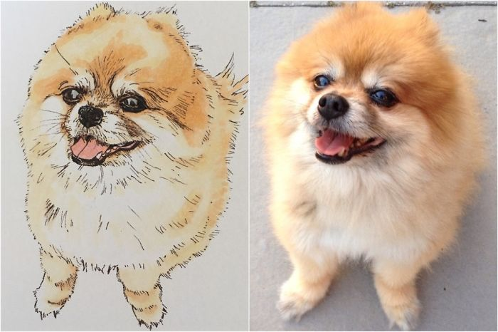 This Is A Sketch I Drew Of My Pomeranian, Viggo. He's 14 Years Young And My Best Buddy!