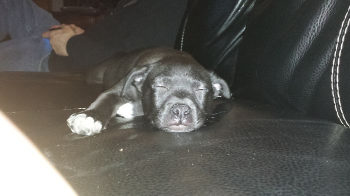 My Sweet Little Jasper ❤️