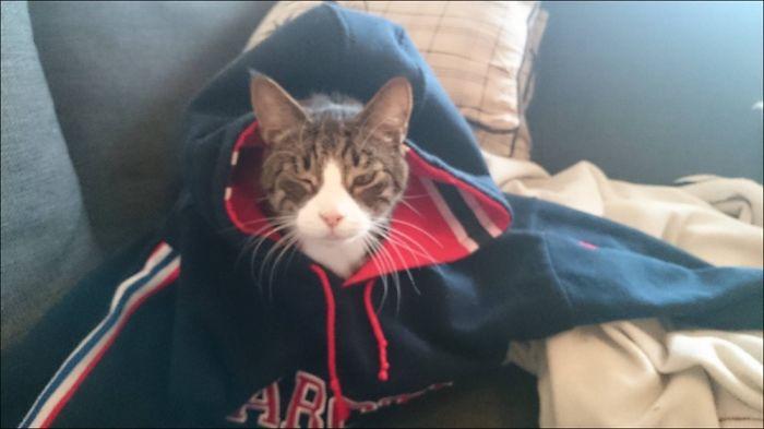 Newly Woken Cat :d