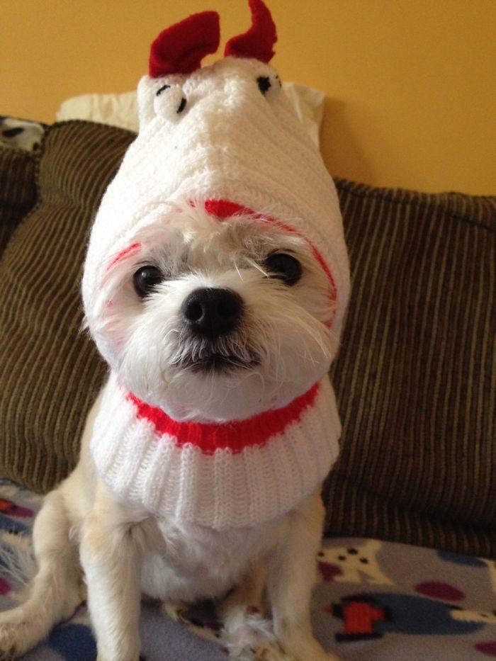 Snickett Looking Cute In A Chicken Hat!