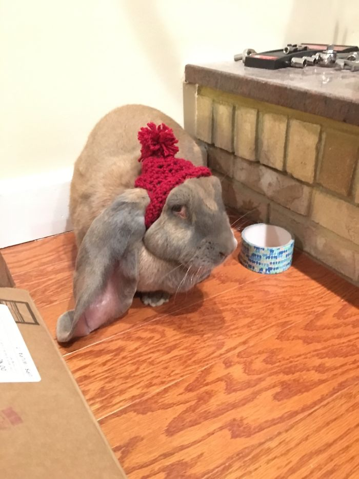 Rabbit In A Custom Hat. So Much Sass In This Picture