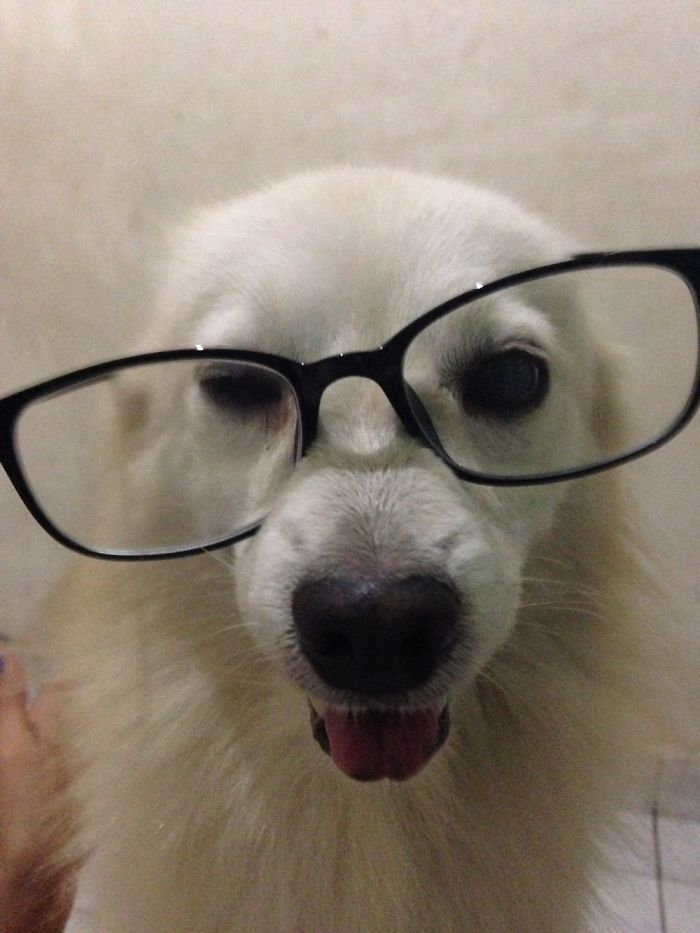 My Nerdy Dog