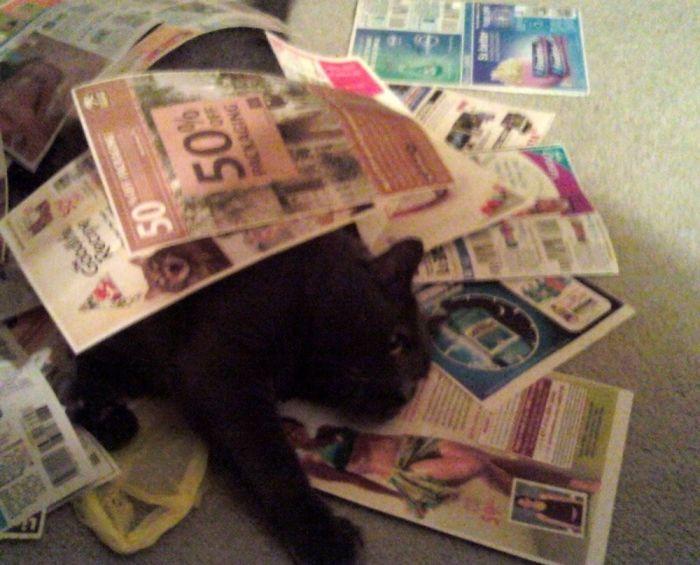 Crazy Coupon Cat.