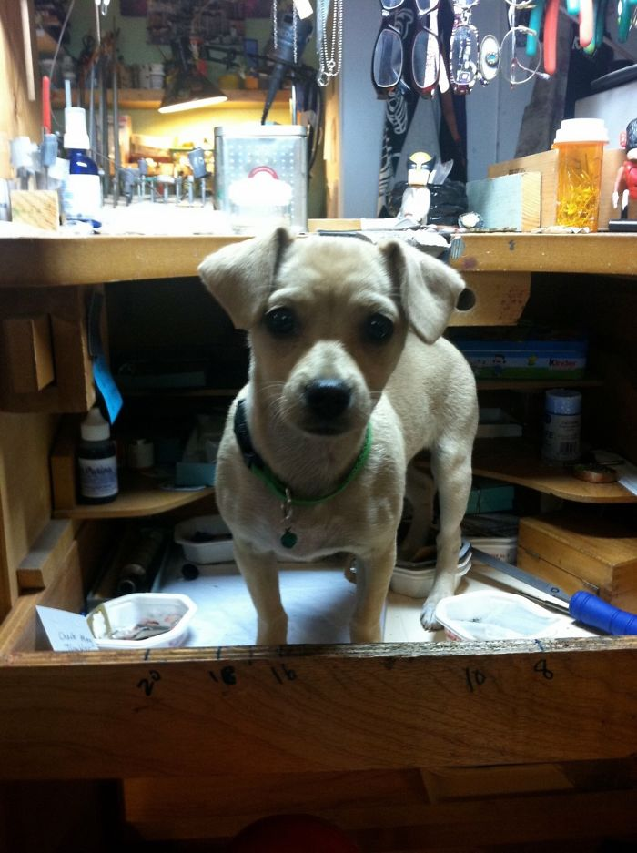 Piepie, As A Pup. I'm A Jeweler, She Loved Climbing Into My Workbench