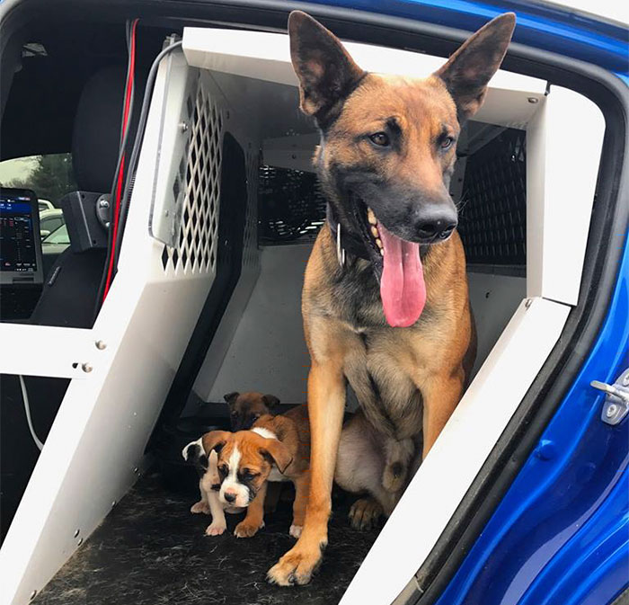 K9 Rescues 3 Abandoned Puppies With His Partner