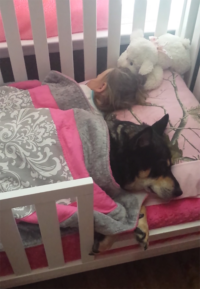 Rescue Dog Raven Napping In The Crib Under The Covers With A Little Girl