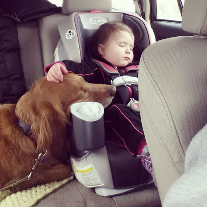Long Car Rides Are Better When You Can Nap With Your Best Friend