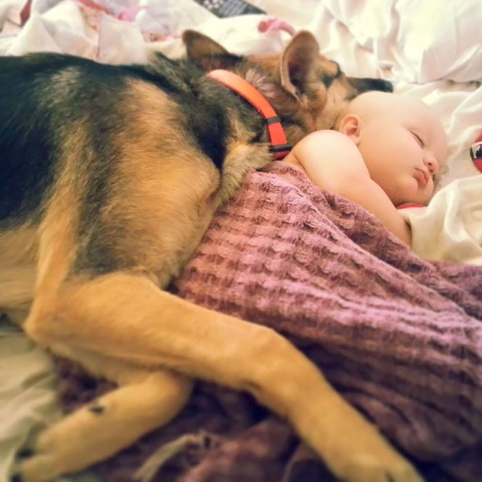 German Shepherd Sleeping With A Baby