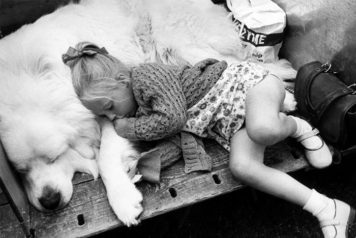 Little Girl Asleep With Her Dog